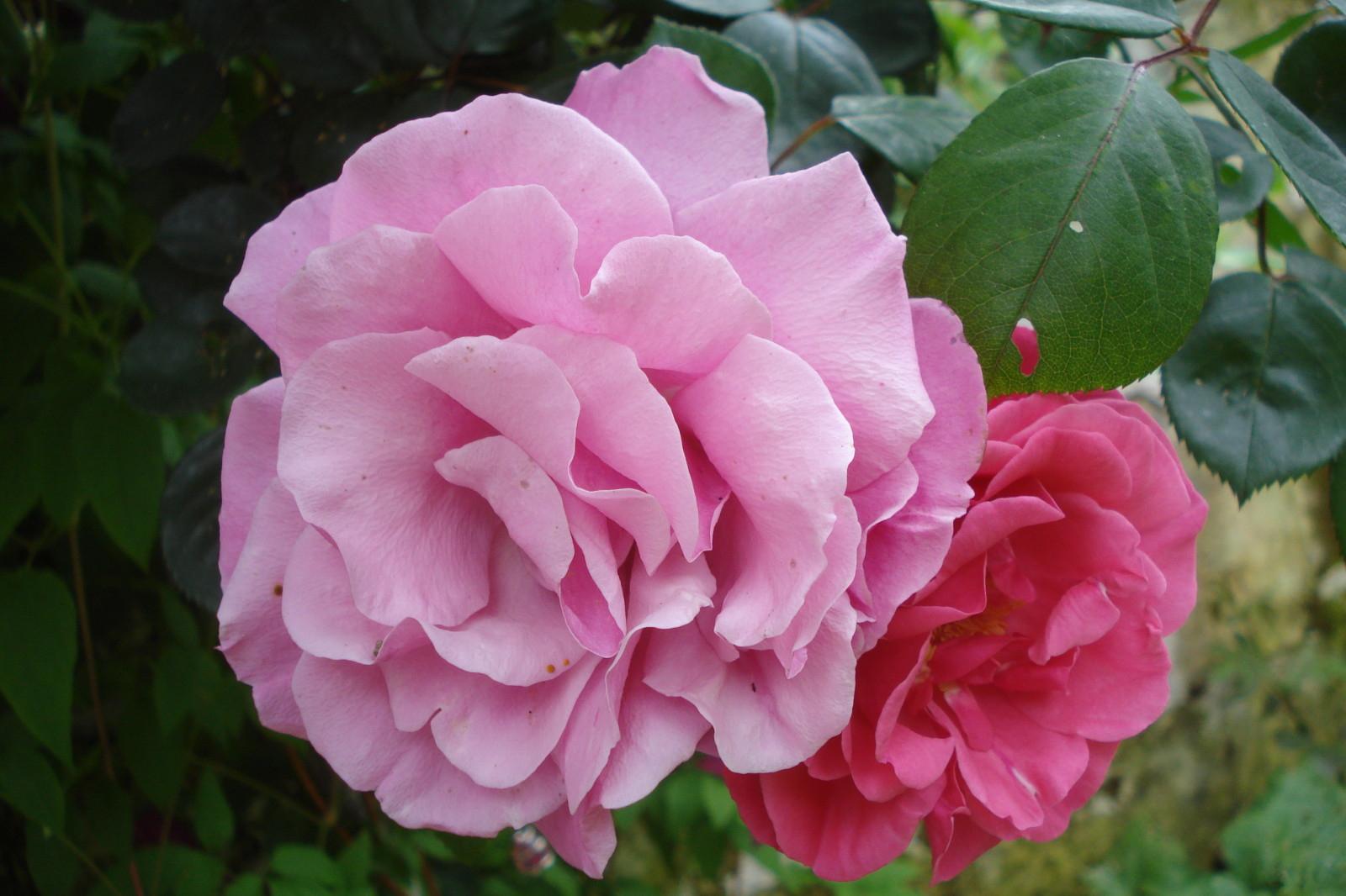 Arbre Aux Gentianes Jardiland Beau Photos Cagouille S Garden Cagouille S Garden C Est Mon Petit Jardin