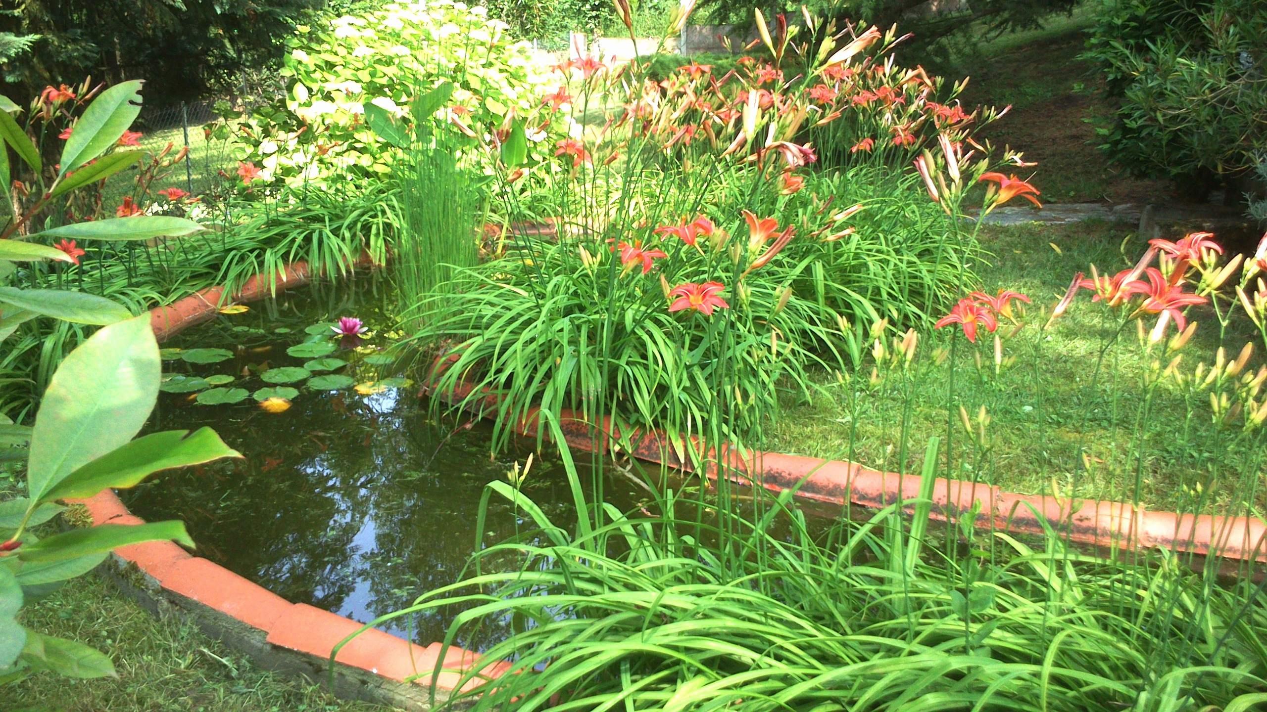 Bassin Jardin Moderne Beau Photos Bassin De Jardin Meilleur De Amenagement Petit Jardin Unique