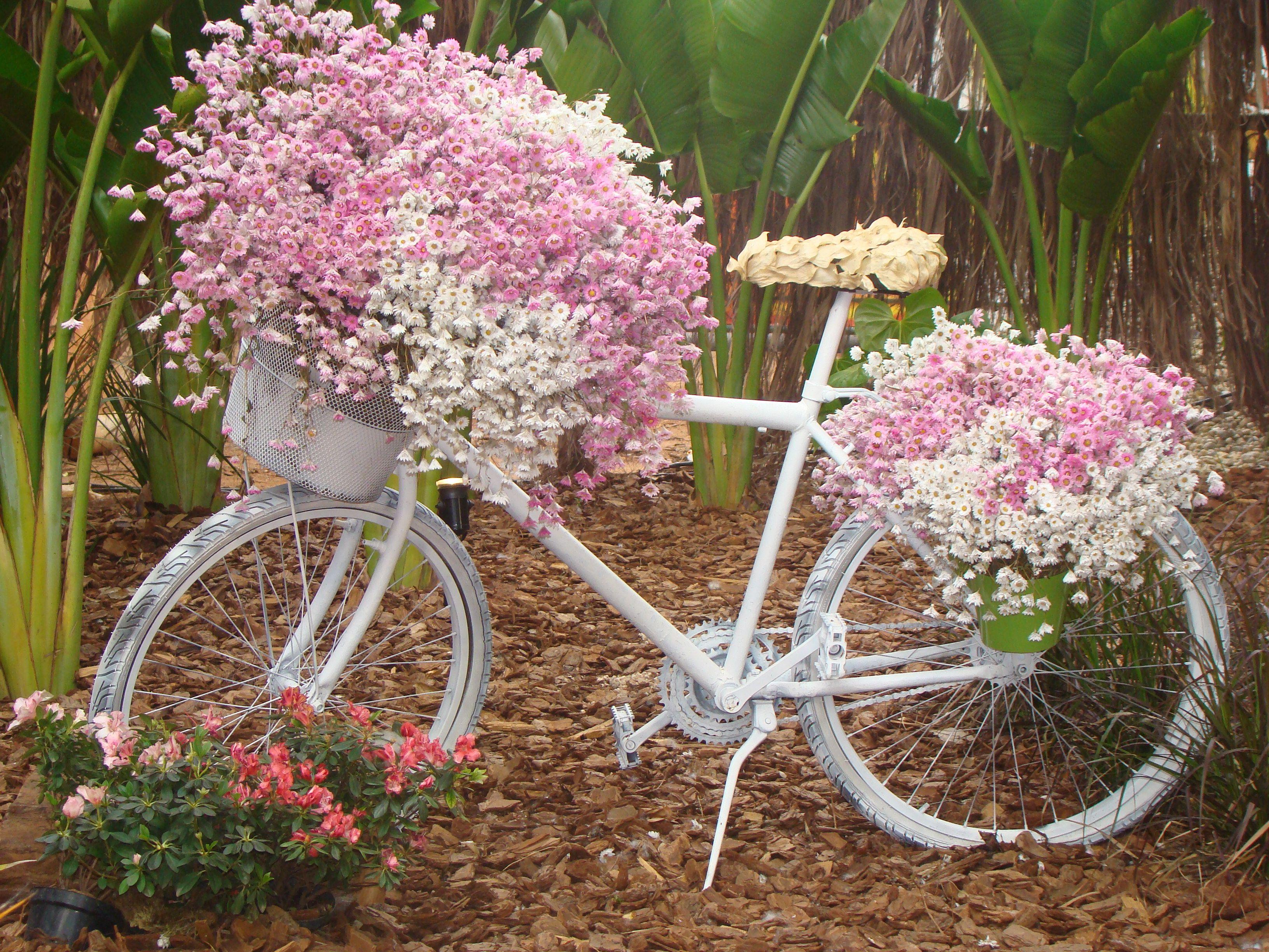Brouette Deco Jardin Beau Collection Eileen Clark Pink Pinterest