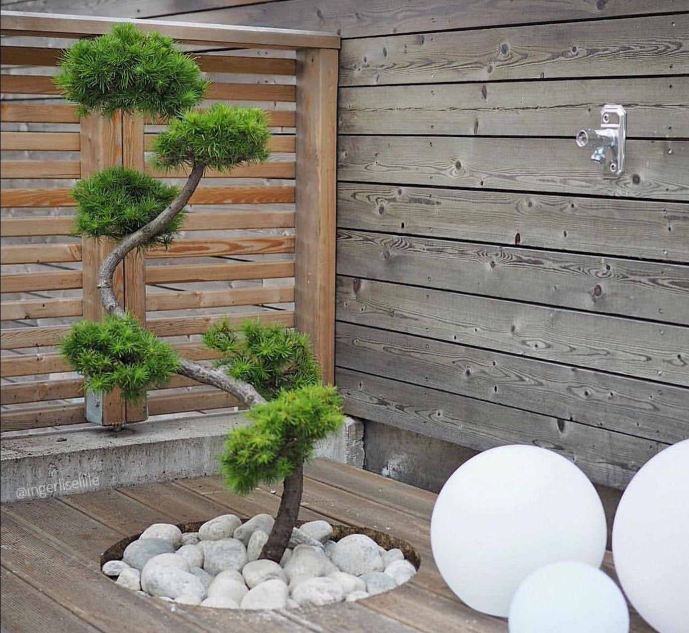 Brouette Deco Jardin Beau Image Brouette Decorative De Jardin En Bois Pour Impressionnant épinglé
