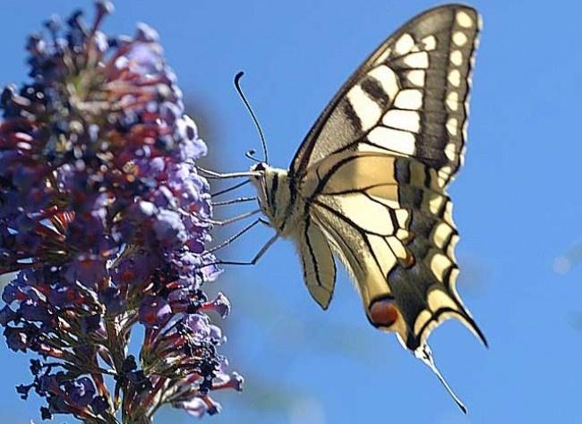 Calendrier Lunaire Rustica Avril 2017 Beau Images Les 24 Meilleures Images Du Tableau Au Jardin Sur Pinterest