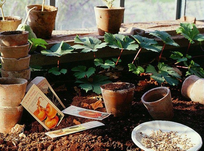 Calendrier Lunaire Rustica Avril 2017 Impressionnant Photos Les 1235 Meilleures Images Du Tableau Jardinage Rustica Sur