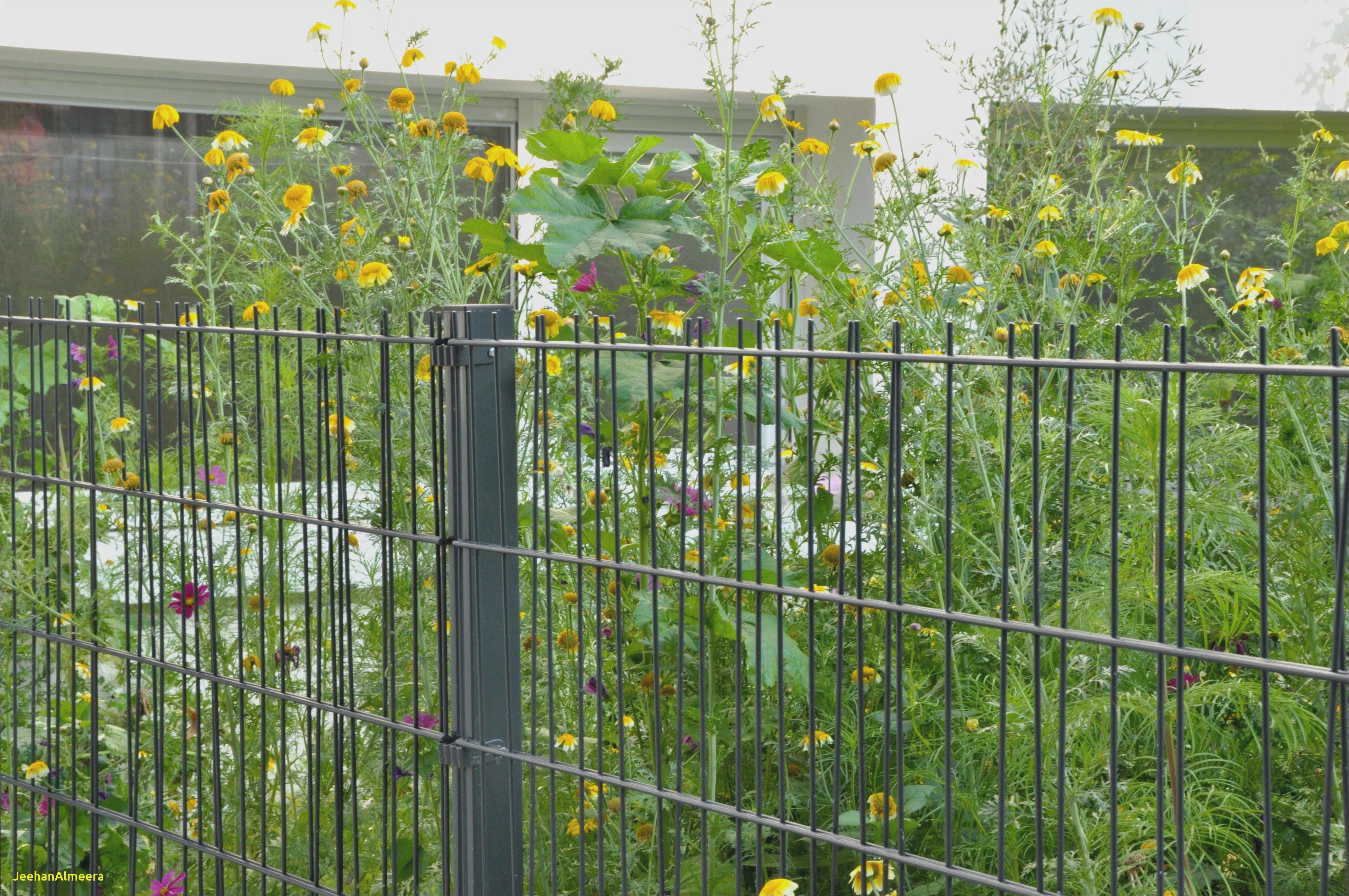 Cloture Moderne Pas Cher Frais Galerie Barriere De Jardin Pas Cher Avec Charmant ¢Ë†Å¡ Conception De Jardin