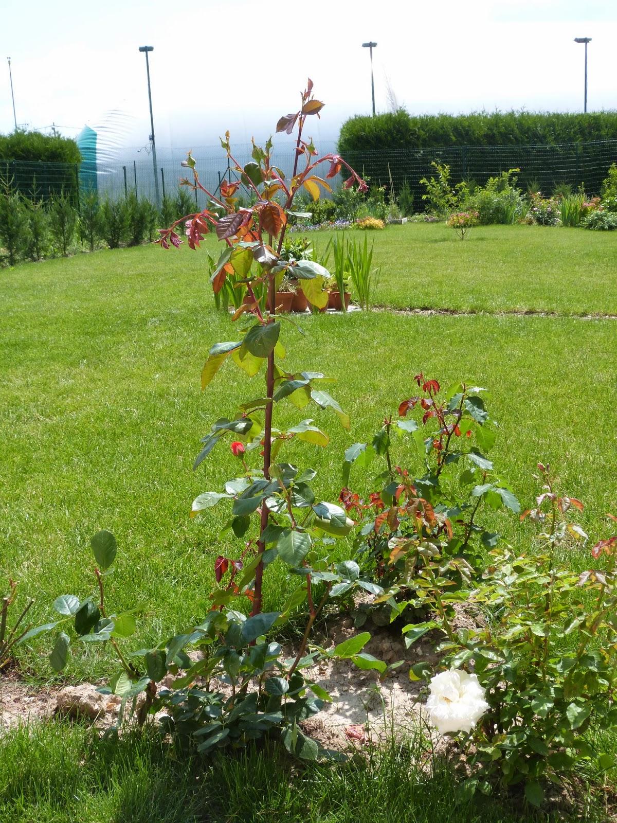Derrière Les Murs De Mon Jardin Frais Galerie Un Jardin Des Fleurs Juin 2014