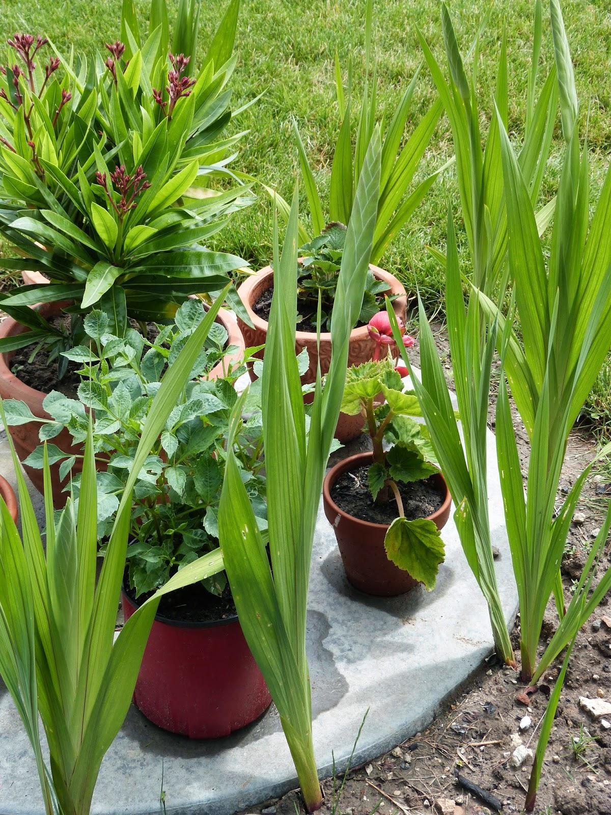 Derrière Les Murs De Mon Jardin Inspirant Photos Un Jardin Des Fleurs Juin 2014
