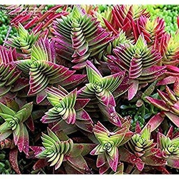 Fabriquer Serre De Jardin Polycarbonate Luxe Galerie Bache De Serre De Jardin Inspirant Fabriquer Serre De Jardin
