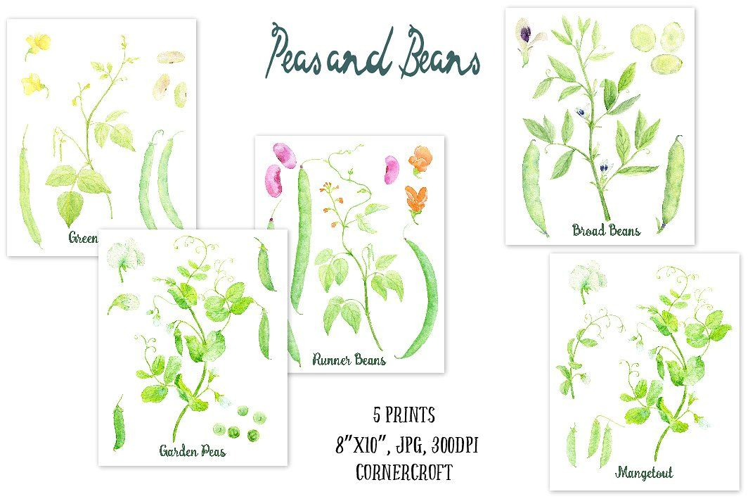 Haricots Verts Dessin Impressionnant Galerie Watercolor Clipart Peas and Beans