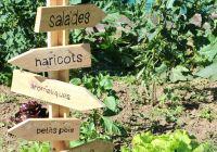 Haricots Verts Dessin Unique Stock Les Jardins De Koutoubia