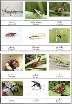 Jardin De Kiran Beau Photographie Les 53 Meilleures Images Du Tableau Documents Montessori Gratuits