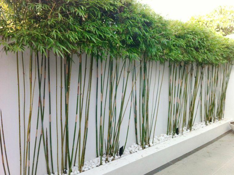 Jardin De Kiran Impressionnant Collection Haie De Jardin Découvrez Les Secrets Des Plantes Brise Vue