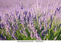 Jardin De Provence Nemours Impressionnant Photos Le Monde Des Foug¨res Pépini¨re Ezavinle Monde Des Foug¨res