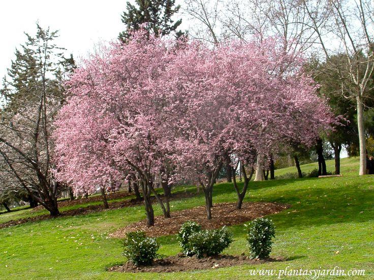 Jardin De Provence Nemours Inspirant Photos Les 264 Meilleures Images Du Tableau as Sur Pinterest