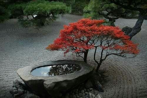 Jardin Zen Amberieu Élégant Image Water Feature Under the Tree Outdoor Pinterest