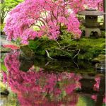 Jardin Zen Amberieu Inspirant Galerie Jardin Zen Amberieu Intelligemment Michael Jaco