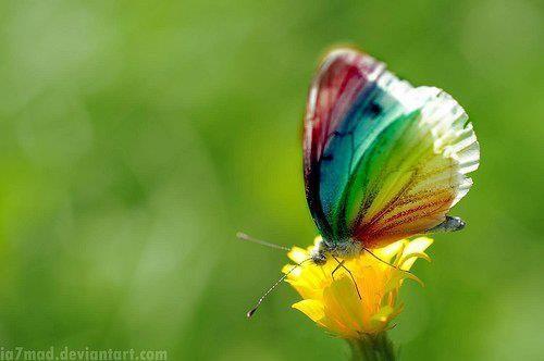 Jeux Kookai Papillon Luxe Galerie Les 117 Meilleures Images Du Tableau Fashion arena Sur Pinterest