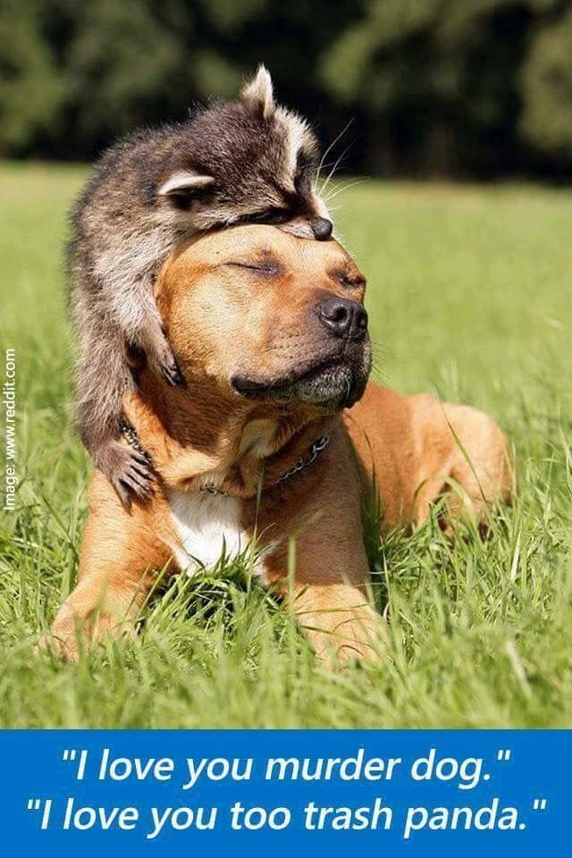 """La Passion Des Poemes Élégant Images the Odd Couple """"trash Panda & Murder Dog"""""""