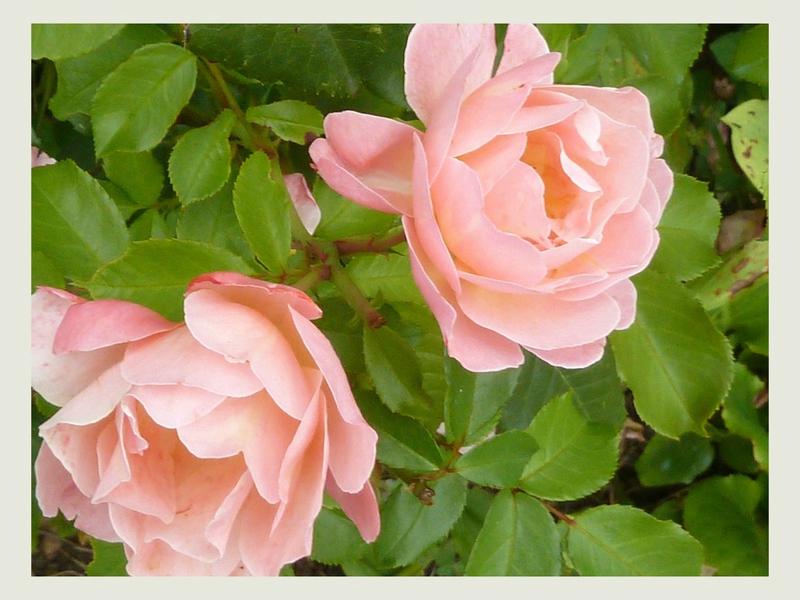 Le Jardin De Cheneland Impressionnant Galerie Lundi soleil 9 Le Blog De Valériane