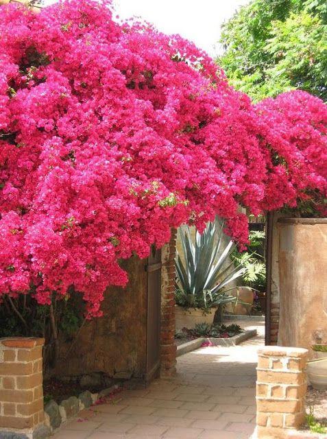 Le Jardin Secret Wantzenau Impressionnant Galerie 35 Best Les Terrasses & Jardins De Ma Entrée De Jardin Portails