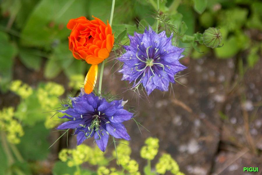 Les Jardins De Tadine Meilleur De Photographie Jardin De Tadine Luxe Conception De La Maison Et évier De Cuisine