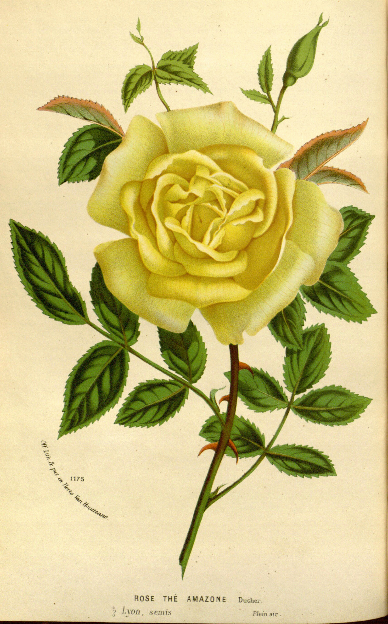 Les Serres De Gouaix Beau Collection Serre De Jardin Richel Unique Serres De Jardin Luxury Flore Serres