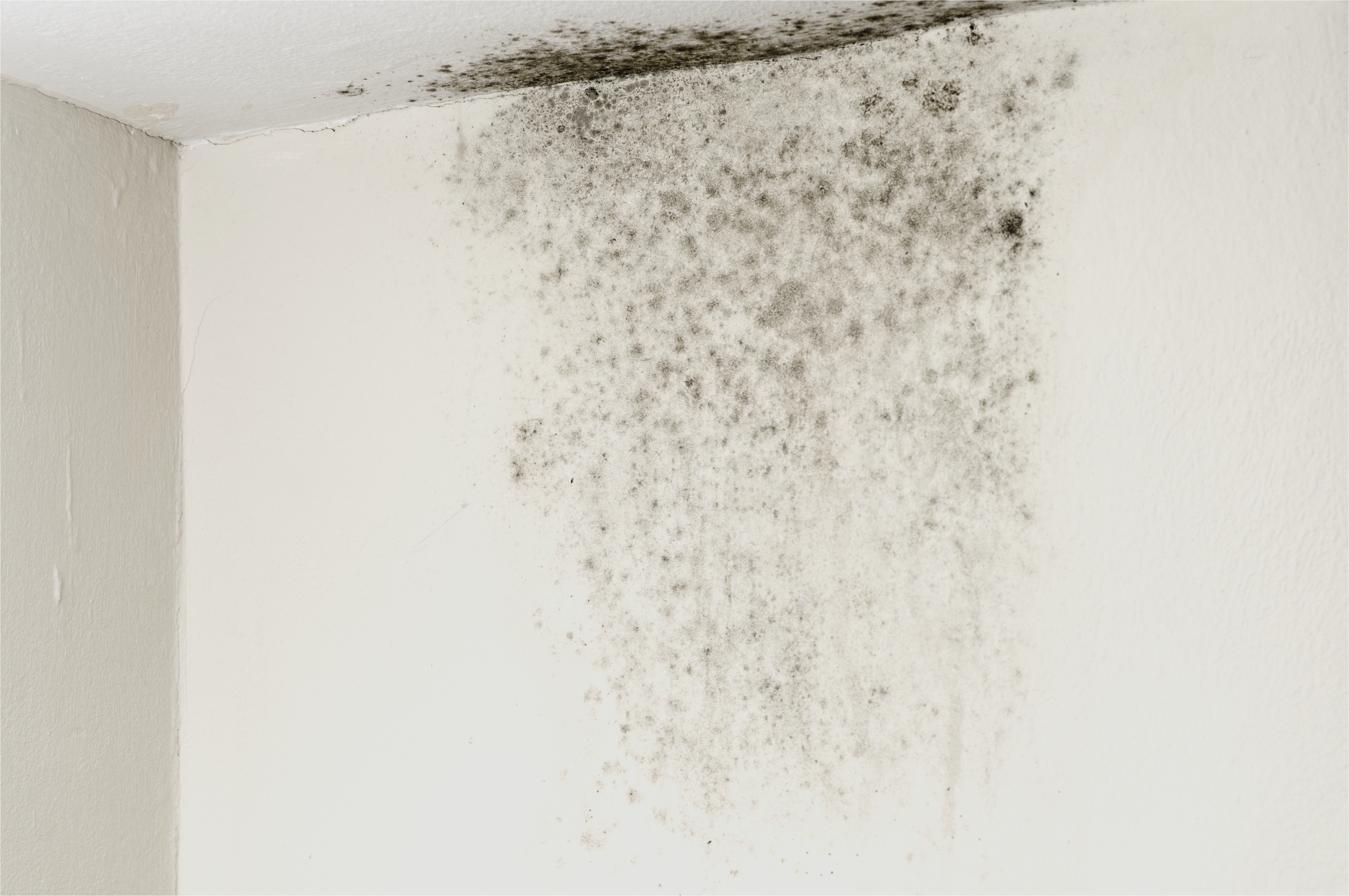 Moisissure plafond salle de bain locataire impressionnant - Nettoyer moisissure salle de bain ...