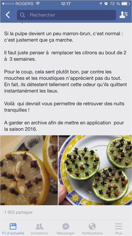 Moucherons Cuisine solution Luxe Stock Moucheron Dans La Maison Inspirant Ahuri Moucheron Dans La Cuisine
