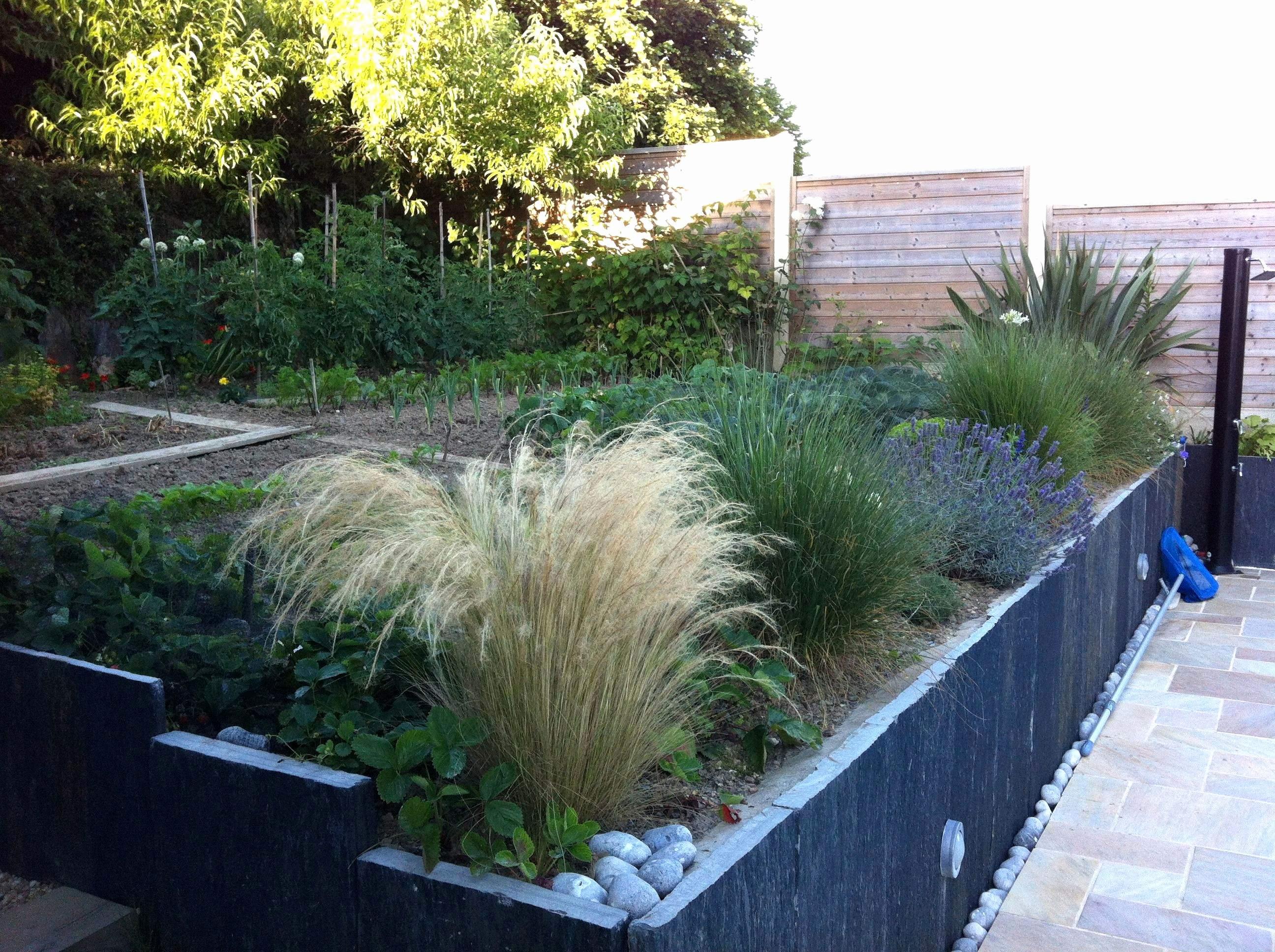 Panneau Treillis Bois Castorama Frais Stock Treillis De Jardin Beau Barriere Jardin Pour Chien Pour Génial