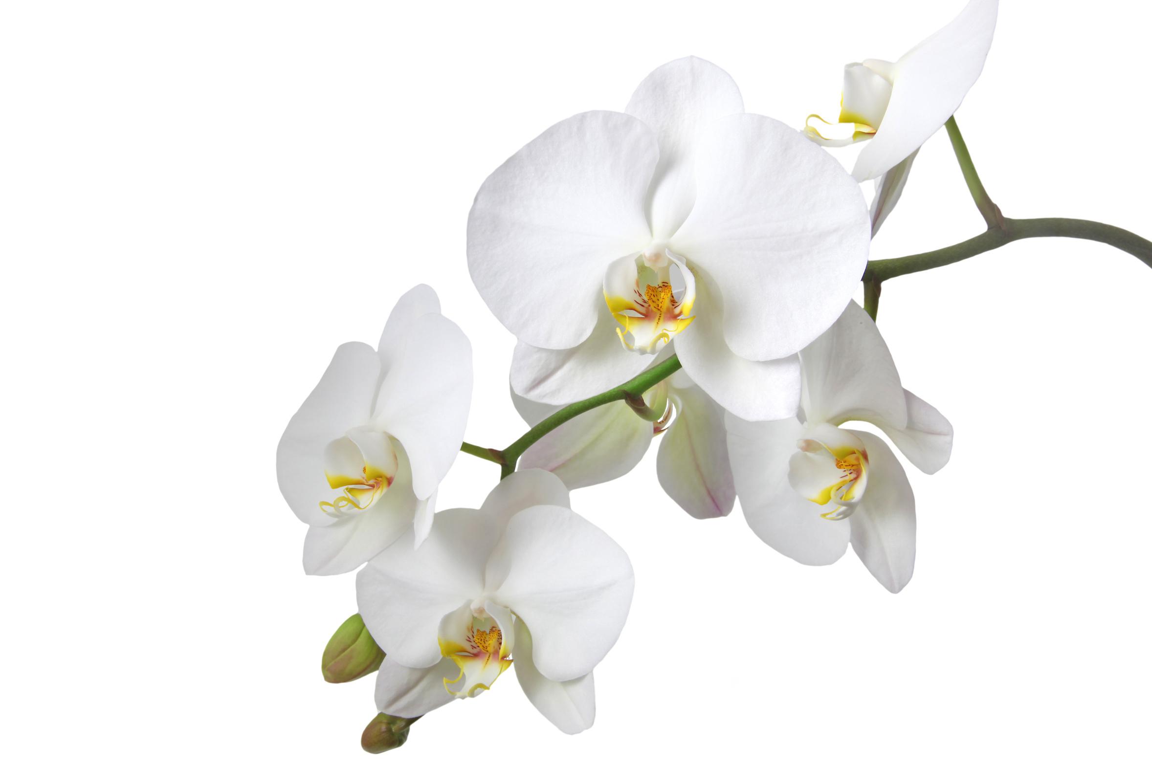 Protège Canapé Cuir Anti Glisse Inspirant Collection Conserver Des orchidees