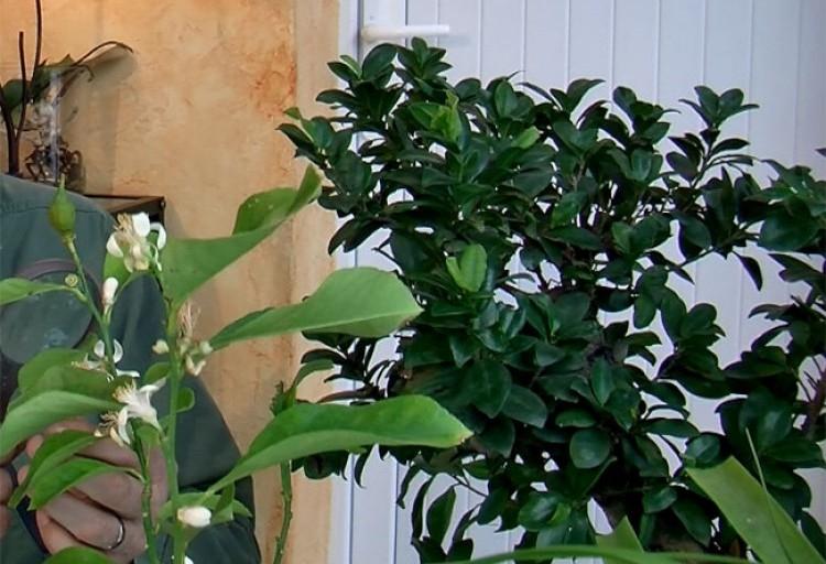 Protège Canapé Cuir Anti Glisse Meilleur De Collection Conserver Des orchidees