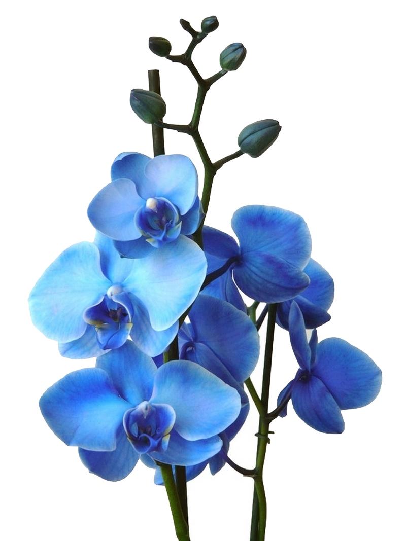 Protège Canapé Cuir Anti Glisse Unique Collection Conserver Des orchidees