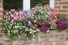 Rustica Calendrier Lunaire Juillet 2017 Unique Photos 1240 Best Jardinage Rustica Images On Pinterest