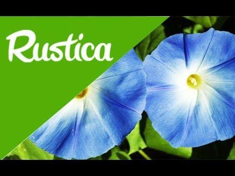 Rustica Calendrier Lunaire Juillet 2017 Unique Stock Les 1235 Meilleures Images Du Tableau Jardinage Rustica Sur