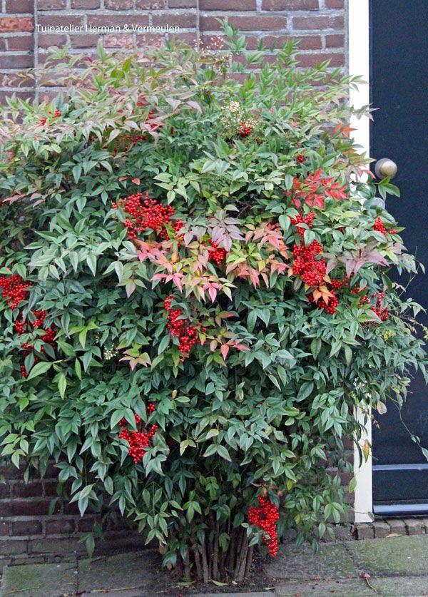 Salon De Jardin Cora 2017 Beau Galerie Salon De Jardin Cora Inspirant 44 Best Wintergroene Hagen En