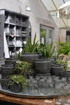 Serre De Gally Sartrouville Frais Collection Pots Et Plantes Le Bon Accord Pinterest