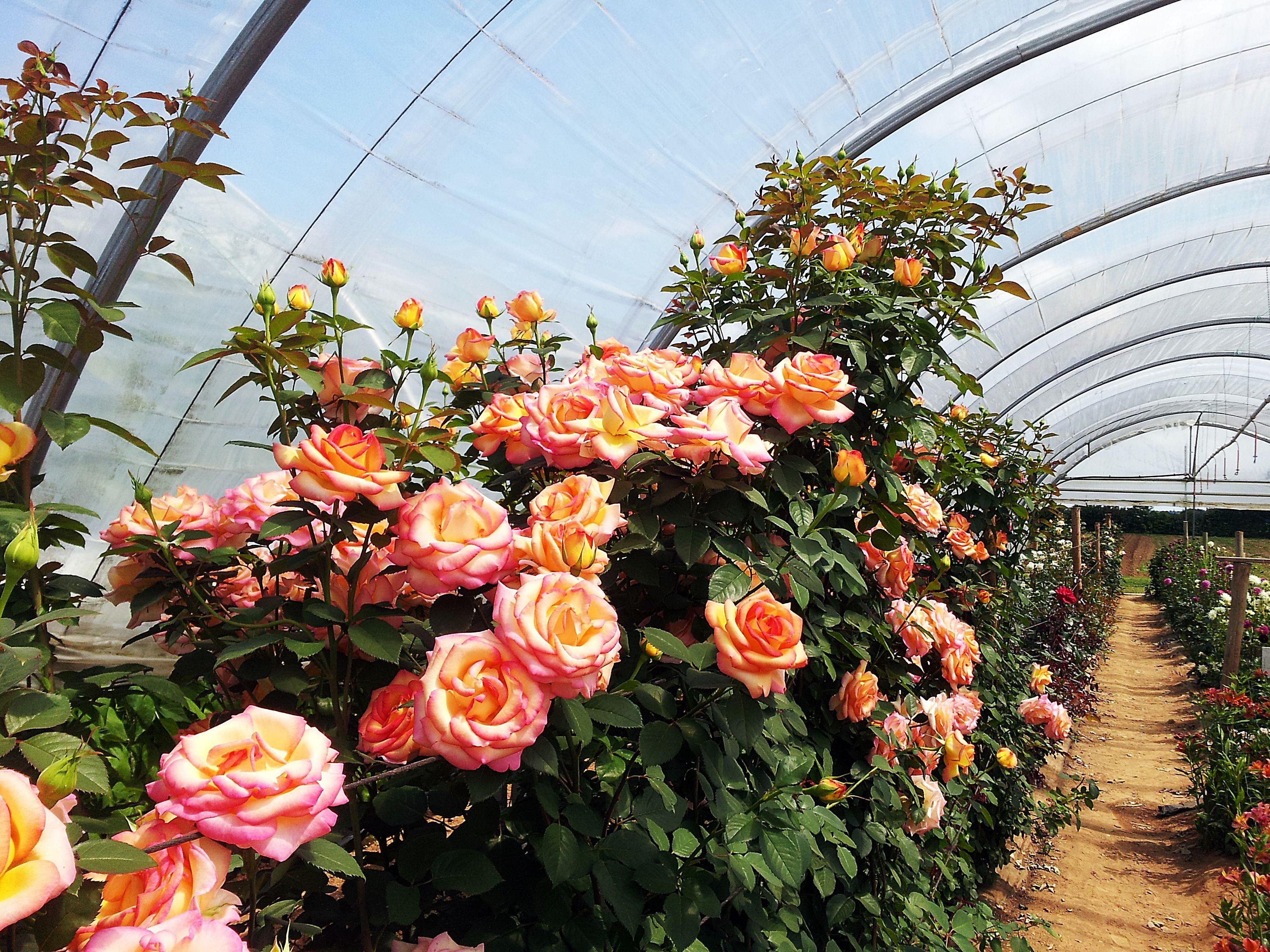 Serre Le Bon Coin Beau Images Le Bon Coin Serre De Jardin Ainsi Que Inspiration Roses sous Serres