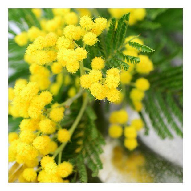 Tablier De Jardinier Gamm Vert Inspirant Photos Les 14 Meilleures Images Du Tableau Plante Fleurie Sur Pinterest
