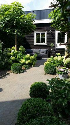 Treillage Bois Pour Plantes Grimpantes Castorama Beau Photos épinglé Par Nancy Mckay Sur Hedges Fences Dividers