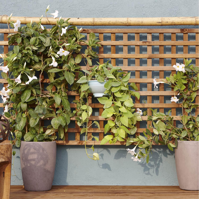 treillage bois pour plantes grimpantes castorama l gant photos jardiniere avec treillis bois. Black Bedroom Furniture Sets. Home Design Ideas
