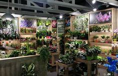Vignette Karl Lagerfeld Leclerc Beau Image 36 Best Floral Shop Images On Pinterest