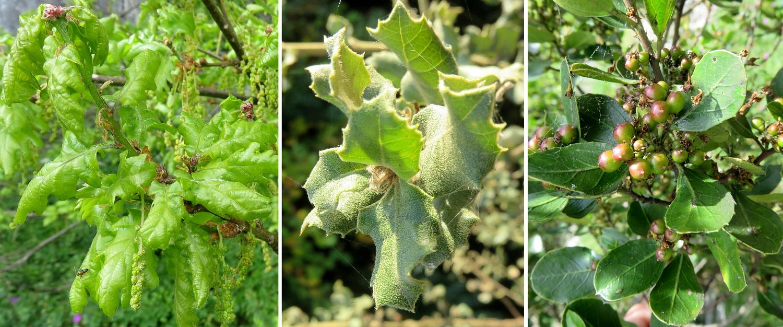 Voile D Ombrage Botanic Beau Image Sauvages Du Poitou Résultats De La Recherche