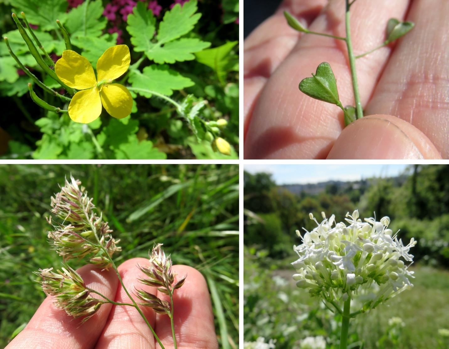 Voile D Ombrage Botanic Beau Photographie Sauvages Du Poitou Résultats De La Recherche