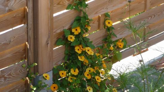 Voile D Ombrage Botanic Meilleur De Galerie Terrasse En Bois Avec Des Fleurs Roses Frais Od Bois & Cl´ture Notre