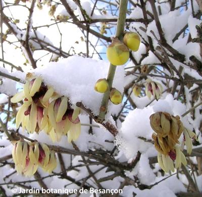 Voile Hivernage Botanic Luxe Photographie Archive Février 2012 L Aurey Des Jardins