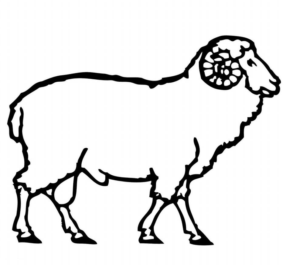 1001+ Gambar Domba Garut Kartun Gratis | Cikimm throughout Gambar Domba Animasi