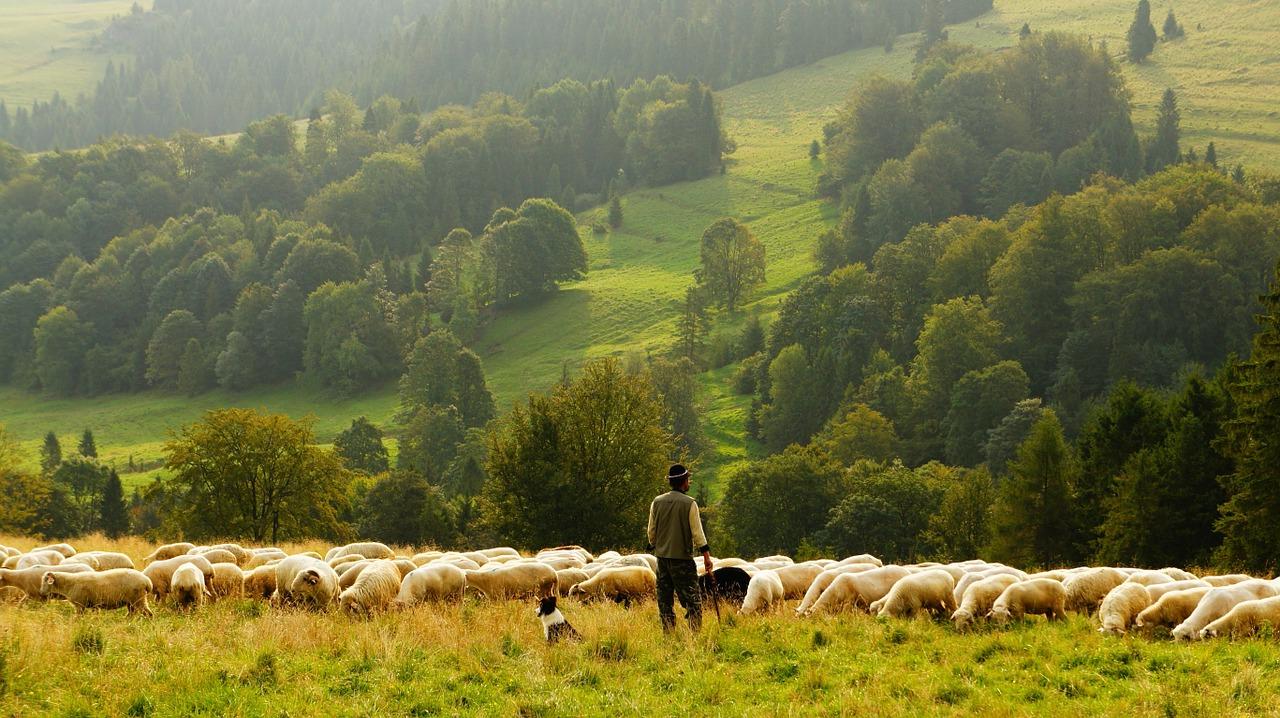 Banyak Kritikan! Arti Mimpi Domba | Paramimpi | Paranormal Mimpi within Gambar Domba Banyak