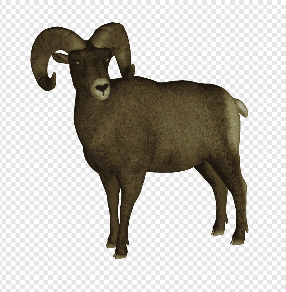 Bighorn Sheep Dall Domba, Binatang, Grafik Komputer 3D throughout Gambar Domba Png