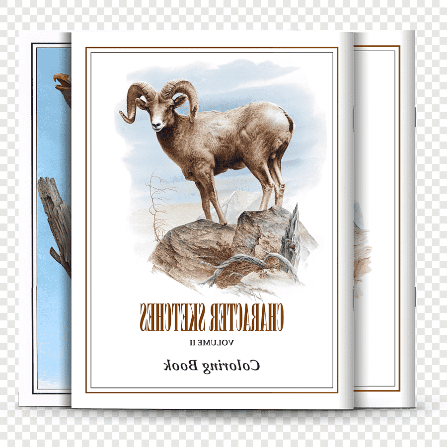 Buku Mewarnai Sketsa Domba Karakter, Toko Buku, Keluarga with regard to Gambar Domba Sketsa