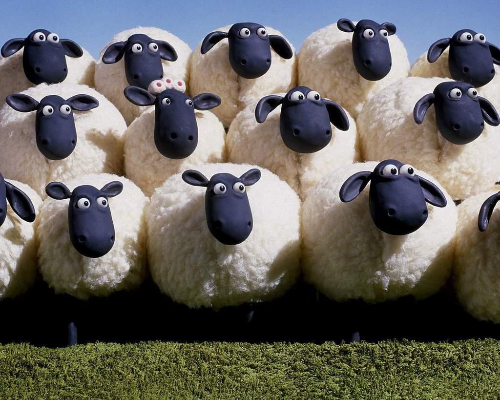 Bunuh Diri Dengan Cara Ternak Kambing Jumlah Banyak   Khusus throughout Gambar Domba Banyak