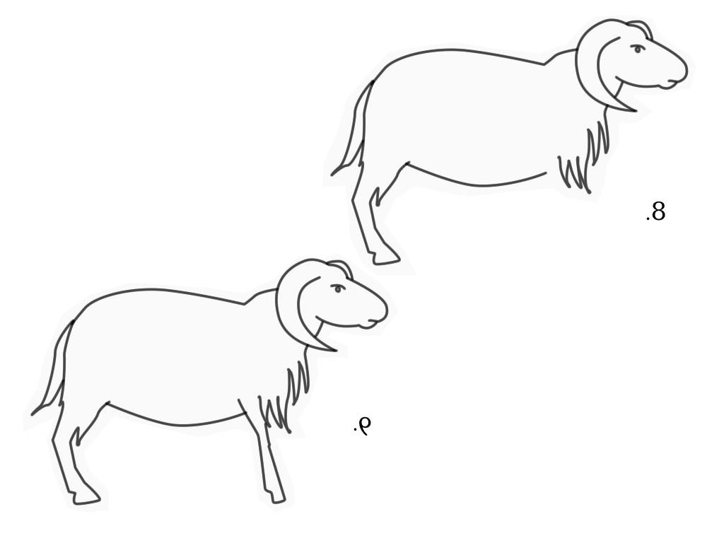 Cara Menggambar Domba Garut | Kuas Ajaib Trans7 with Gambar Domba Sketsa