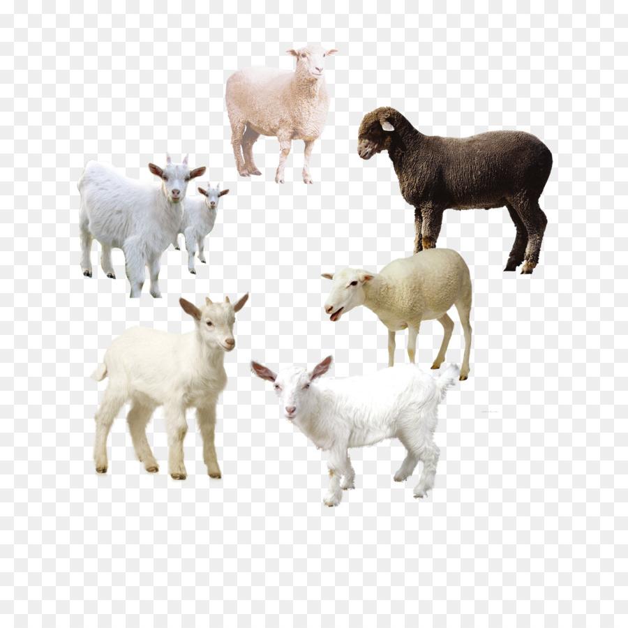 Domba, Kambing, Men Download Gambar Png regarding Gambar Domba Png